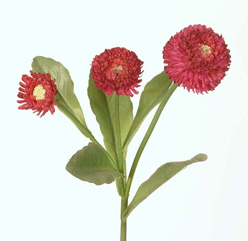 Bellis_Stem_24_cm_Red_1227289[1]