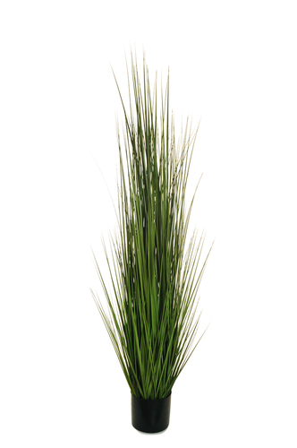 BLADE OF GRASS IN PLASTIC POT D. 15 CM, H. 15 CM, 150 CM.