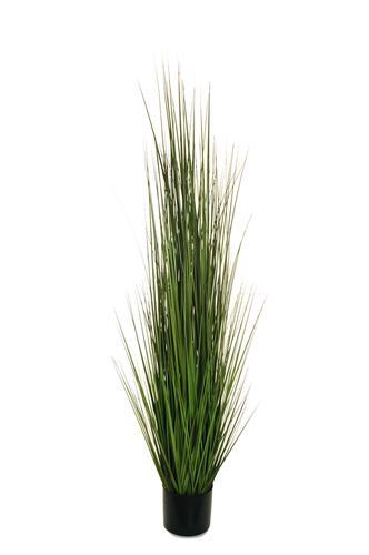 BLADE OF GRASS IN PLASTIC POT D. 15 CM, H. 15 CM, 150 CM.