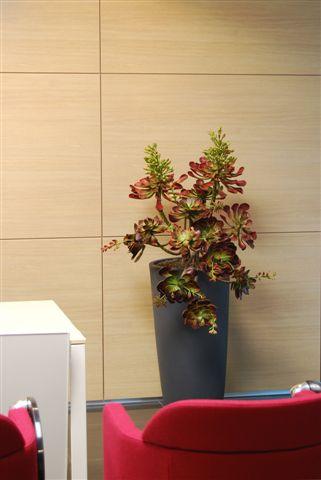 Blushy_Plant_Burgundy_140_cm_V_4401A01