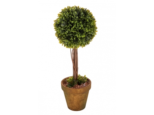 Buxus h 35 cm