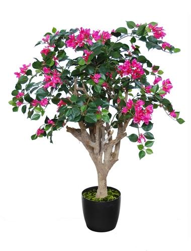 Bouganvillea Robustina  Fuchsia