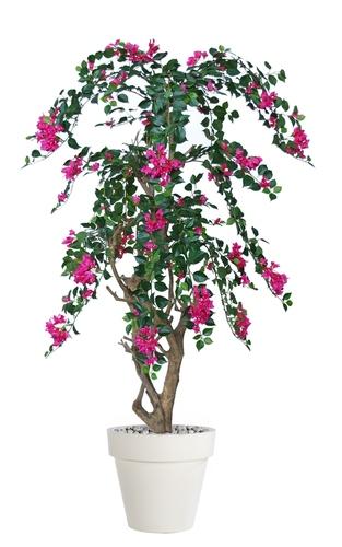 Bouganvillea Stylish 160 cm Fuchsia