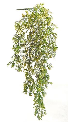 Boxwood Bush 110 cm Green