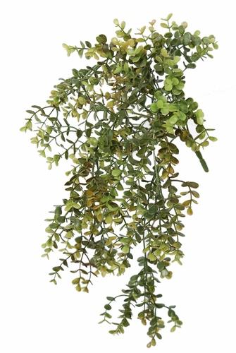 Boxwood Mini Bush 40 cm Green