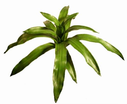 Bromelia_Plant_50_cm_Green_4155GRN