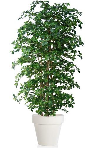Buxifolia Boschetto 220 cm Green