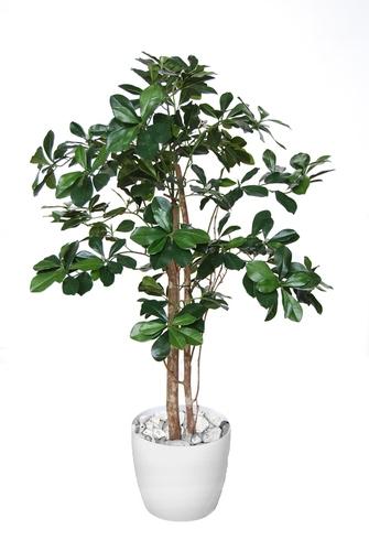 Buxifolia Elfie 100 cm Green