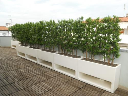 Boxwood hedge terrace Parma _PASSIONECREATIVA