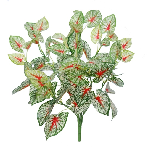 Calladium Bush 48 cm Green Red