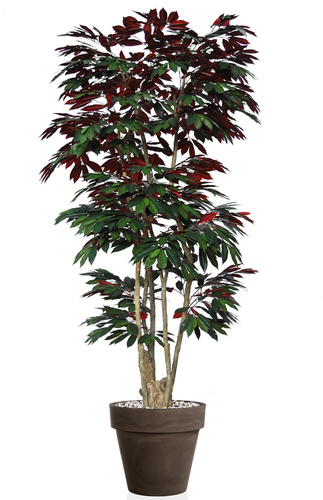 Capensia Nicobar 240 cm Green Red