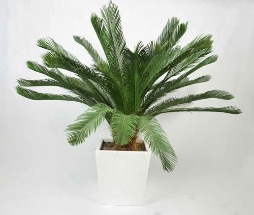 Cycas revoluta pianta artificiale passionecreativa UV PROOF