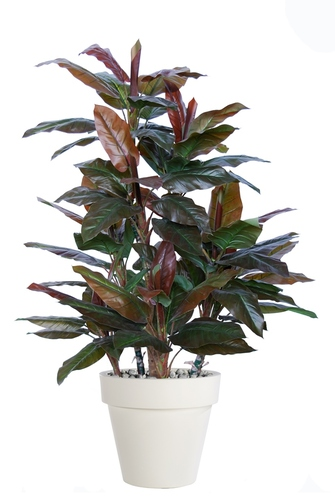 Cordyline Boschetto 170 cm Green Red V5491002