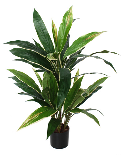 Cordyline Bush w pot 80 cm Green Yellow