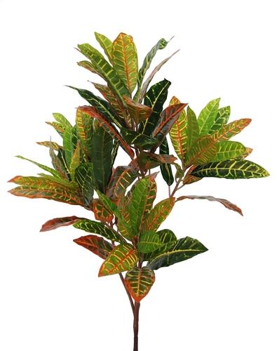 Croton Plant 70 cm Multicolor