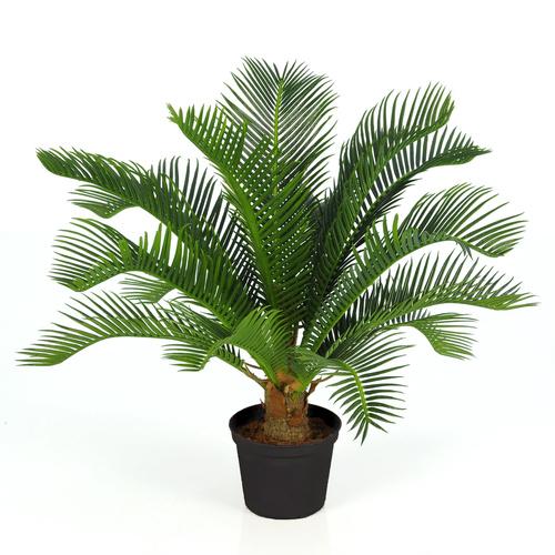 Cycas Plant w pot 40 cm Green 5643GRN