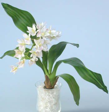 Cymbidium_Jewel_Plant_50_cm_Cream_4018CRM