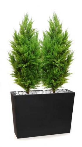 Cypress_Cone_x_2_160_cm_Lt_Green_8106002