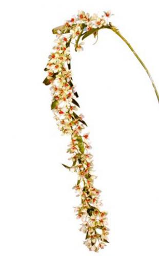 Dendrobium_Miss_Milly_180_cm_White_Red_4388WHR