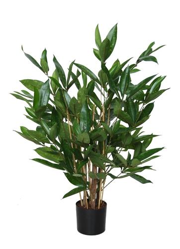 Dracaena Surculosa w pot 60 cm Green