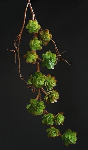 Echeveria Garland 85 cm Multicolor