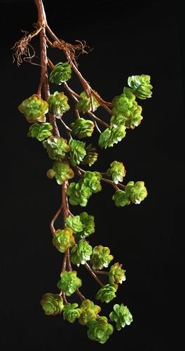 Echeveria Plant 125 cm Multicolor