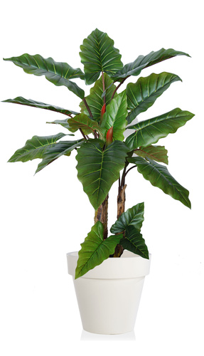 Emerald Philo Plant  170 cm Green