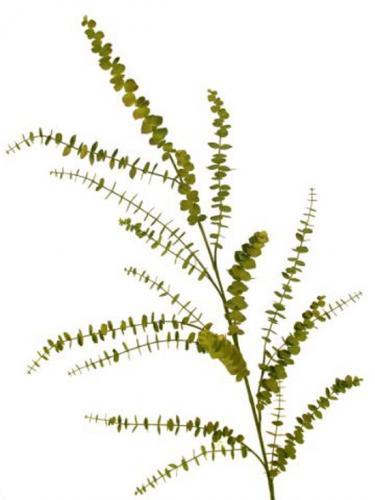 Eucalypthus_Mini_105_cm_Green_4428GRN