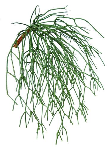 Euphorbia Bush 50 Green 5598GRN