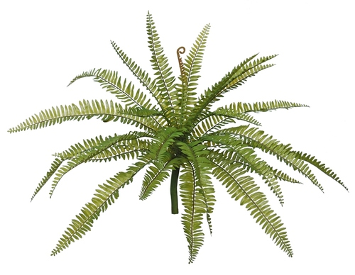 Fern 58 cm Green