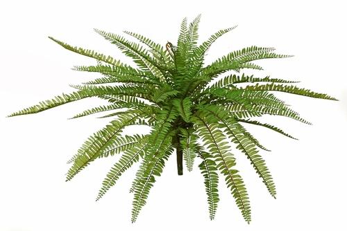 Fern 76 cm Green