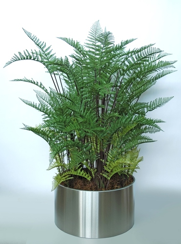 Fern Boschetto 170 cm Green