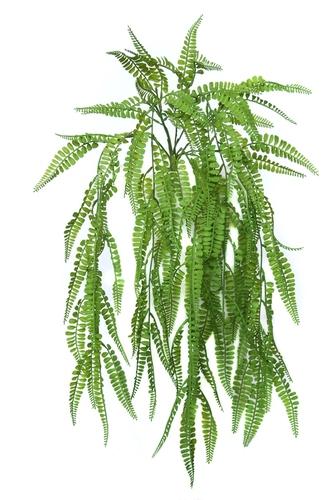 Fern Fabulosa Hanging 65 cm Green