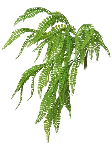 Fern Fabulosa Mini Bush 40 cm Green