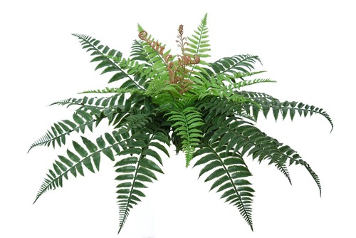 Fern Forest 30 cm Green