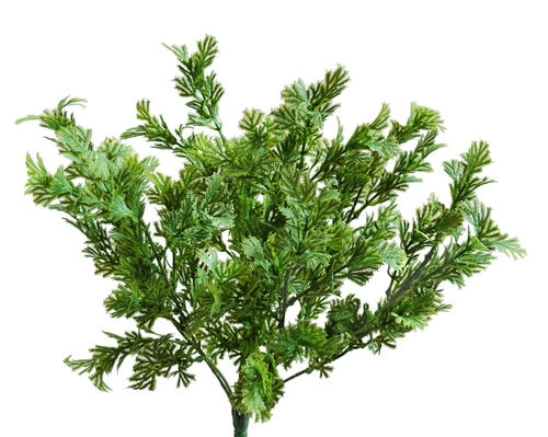 Fern Rock Bush 30 cm Green