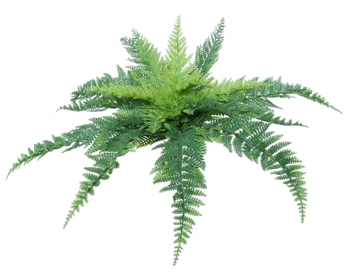 Fern Stratus Medium 30 cm Green