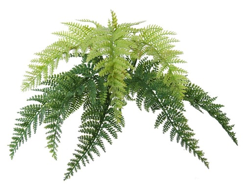 Fern Stratus Small 20 cm Green