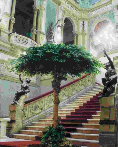 Ficus_benjamin_umbrella_h_320