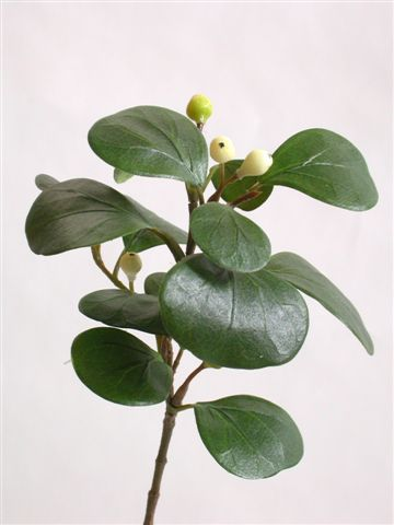 Ficus_Deltoidea_Pick_30_cm_Cream_Grn_4000CRG