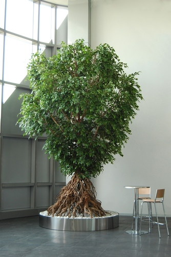 Ficus Exotica Root H 400 cm ARTIFICIAL plant MADE IN ITALY + steel pot to measure