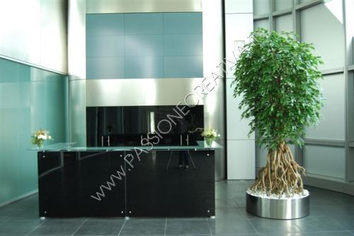 Ficus_Silver_Root__260_cm_Green_1008A21