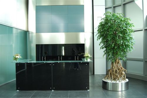 Ficus Silver Root  260 cm - artifcial plant with steel pot