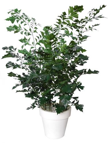 Fishtail Lux 250 cm Green