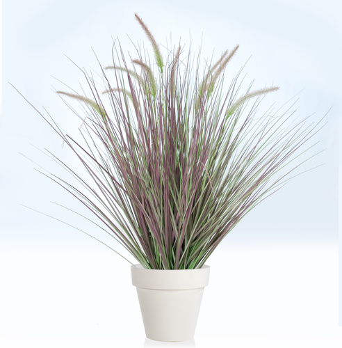 Fountain Grass 90 cm Green Vine