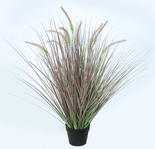 Fountain Grass w pot 90 cm Green Vine