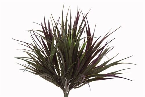Grass Bush Vanilla 40 cm Burgundy