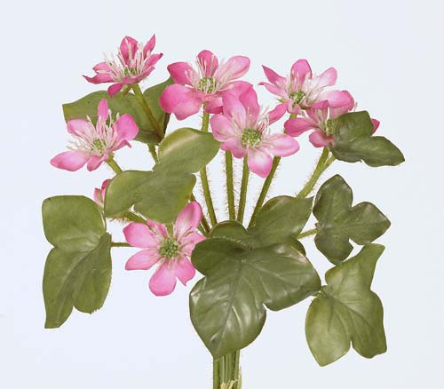 Hepatica_Bundle_20_cm_Fuchsia_Rose_1232119[1]
