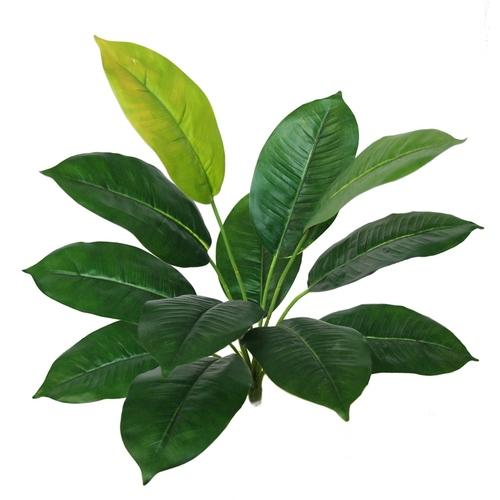 Hosta Bush 45 cm Green