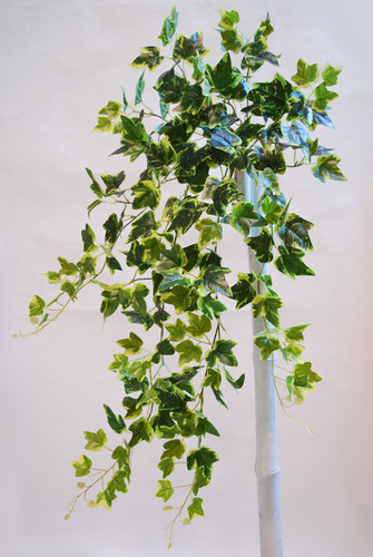 Ivy Bush 90 cm Variegated